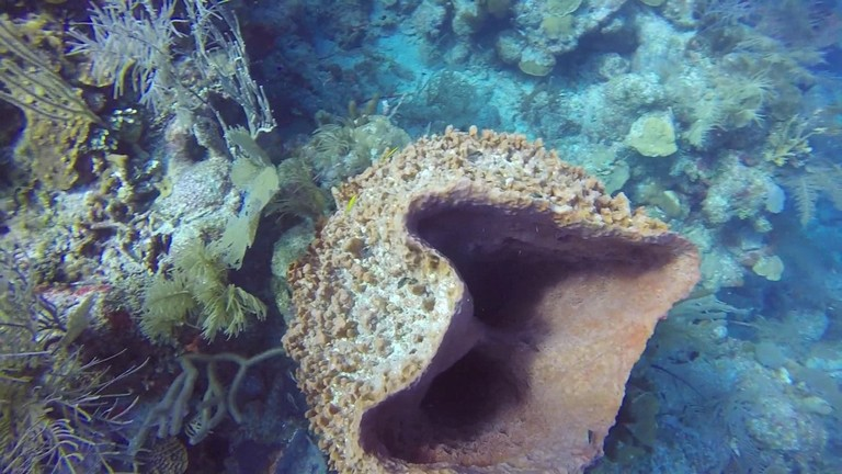 Scuba Diving In Spanish