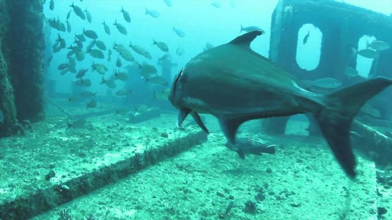 Scuba Diving Myrtle Beach