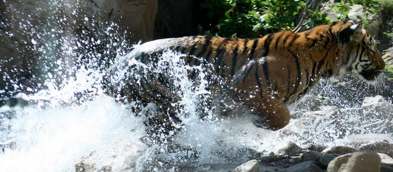 Sedgwick County Zoo Wichita Ks