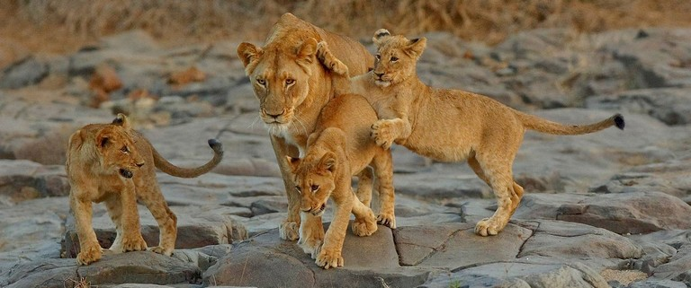 South African Safari Vacation Packages