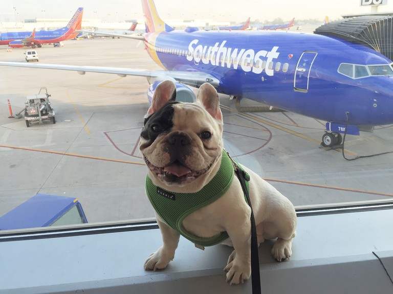 Southwest Airlines Pet Travel