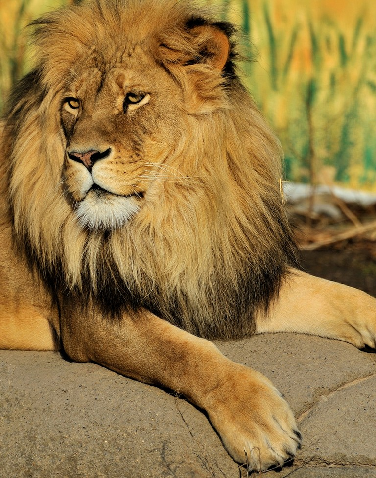Syracuse Ny Zoo