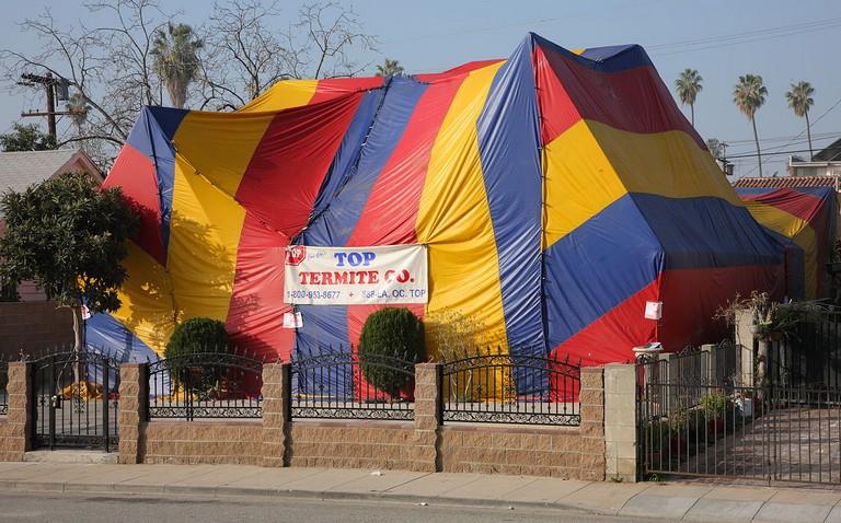 Tent Fumigation Cost