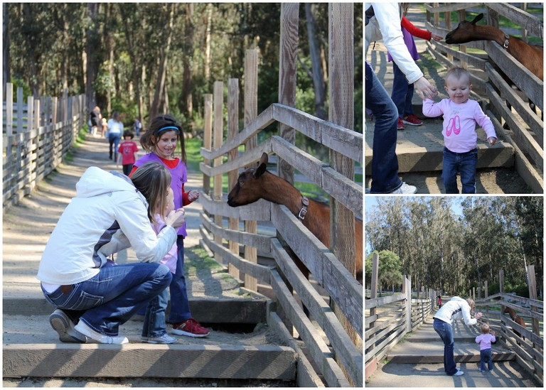 Tilden Park Petting Zoo