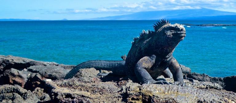Trips To Galapagos