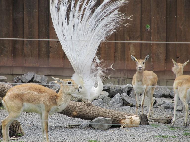 Utica Zoo Hours
