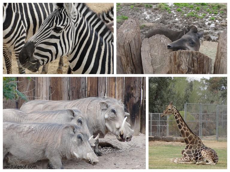 Wildlife World Zoo Phoenix