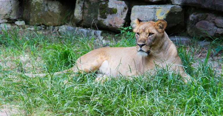 Zoo In Dallas Tx