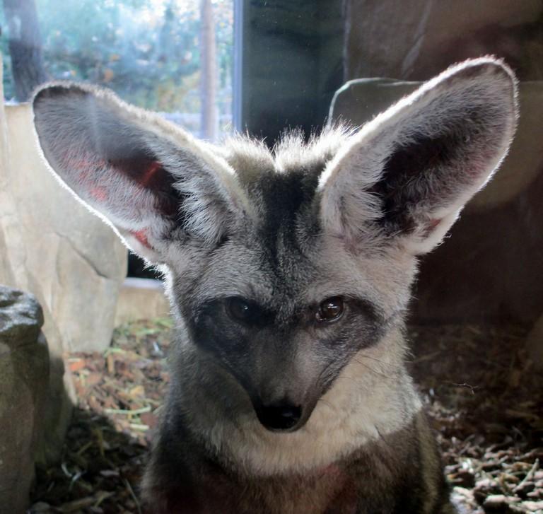 Zoo In Salt Lake City Utah