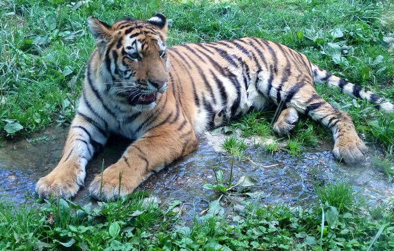 Zoo Peoria Il