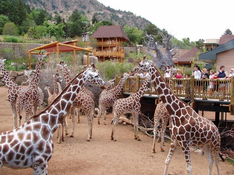 Zoos In Colorado