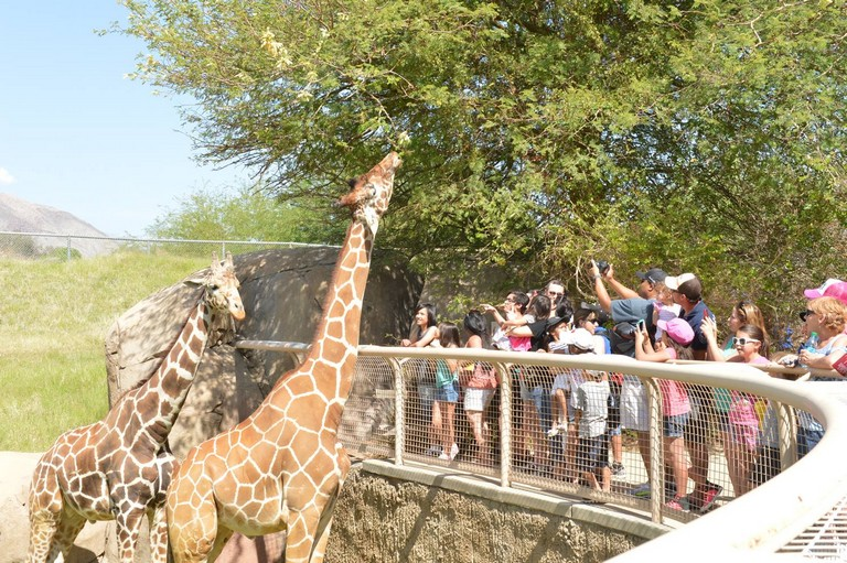 Zoos In The Us