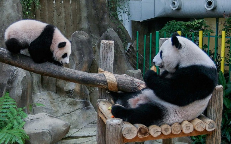 Baby Panda Named To Commemorate 40 Years Of Diplomatic Ties Between Malaysia And China